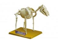 SCIENCE TIME zirga skelets, 28204 28204